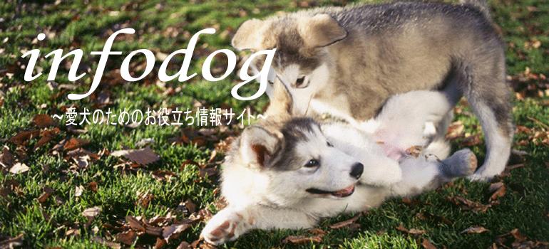 愛犬選びのポイントについてお教えいたします。